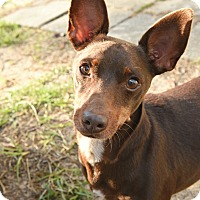 Adopt A Pet :: Maverick - Ocean Springs, MS