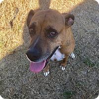 Adopt A Pet :: Katie - Southern Pines, NC