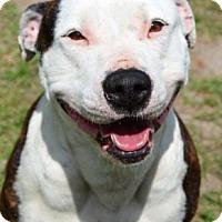 Adopt A Pet :: Marsha - Ridgeland, SC