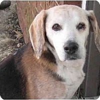 Adopt A Pet :: Norman-ADOPTED - Indianapolis, IN