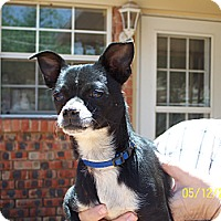 Adopt A Pet :: Scooter - Andrews, TX