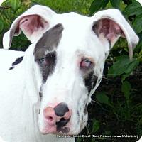 Adopt A Pet :: Fia - Bethel, OH