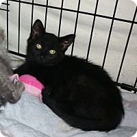 Adopt A Pet :: Abram - Speonk, NY