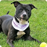 Adopt A Pet :: Dosha - in foster - South Haven, MI