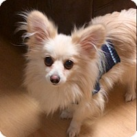 Adopt A Pet :: Rocky in CT - Manchester, CT