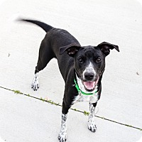 Adopt A Pet :: Jamie - Naperville, IL