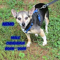 Adopt A Pet :: Nemo - Huddleston, VA