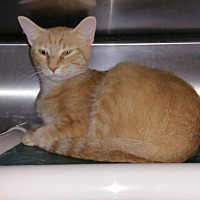 Adopt A Pet :: Bingo - Geneseo, IL