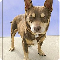 Adopt A Pet :: Ernie looking for playmate - Sacramento, CA