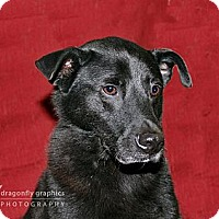 Adopt A Pet :: Jelly I aka Nick - Graceville, FL
