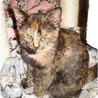Adopt A Pet :: Celeste - Chesapeake, VA