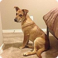 Adopt A Pet :: Ralph - Phoenix, AZ