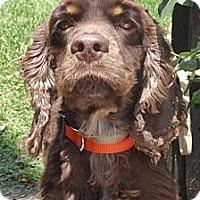 Adopt A Pet :: Hummer - Sugarland, TX