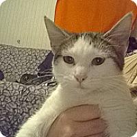 Adopt A Pet :: Breezy - Chilhowie, VA