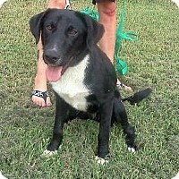 Adopt A Pet :: Harper - Bardonia, NY