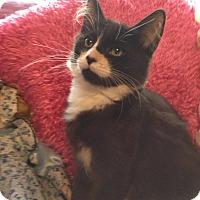 Adopt A Pet :: Pluto - Modesto, CA
