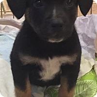 Adopt A Pet :: George Harrison - Woodland, CA