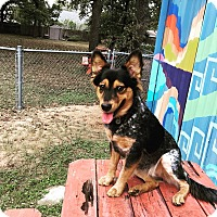Adopt A Pet :: Naya - Austin, TX
