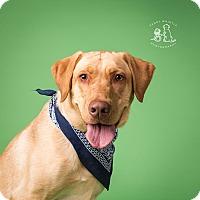 Adopt A Pet :: Tex - Coppell, TX