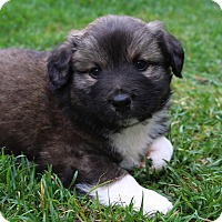 Adopt A Pet :: Triton - La Habra Heights, CA