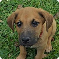 Adopt A Pet :: Grant - Spring, TX