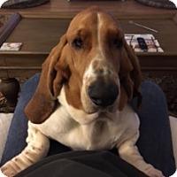 Adopt A Pet :: Daisy 2 - Charleston, SC