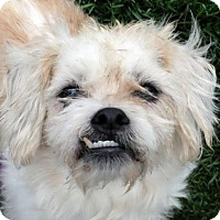 Adopt A Pet :: Jeep - Ann Arbor, MI