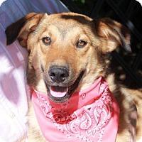 Adopt A Pet :: Hailey - Garfield Heights, OH