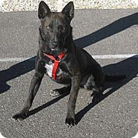Adopt A Pet :: Sparky - Wickenburg, AZ