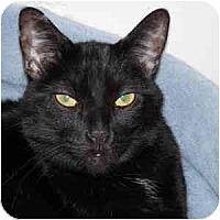 Adopt A Pet :: Erica - Phoenix, AZ