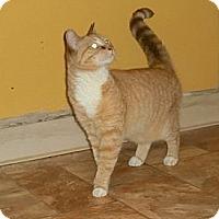 Adopt A Pet :: Maggie - Chesapeake, VA