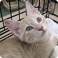 Adopt A Pet :: McGraw - Vero Beach, FL