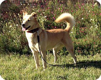 Labrador Retriever Mix Dog for adoption in Schertz, Texas - Molly KG