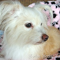 Adopt A Pet :: Magnolia - Palm City, FL