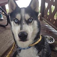Adopt A Pet :: Jack - Horsham, PA