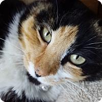 Adopt A Pet :: Lola: Urgent - Piscataway, NJ