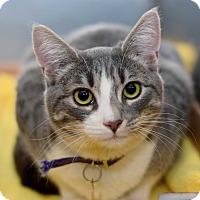 Adopt A Pet :: LaRou - East Brunswick, NJ