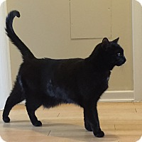 Adopt A Pet :: Roger - Toronto, ON