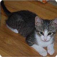 Adopt A Pet :: Kody - Port Republic, MD