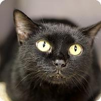 Adopt A Pet :: Morgana - Chicago, IL