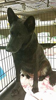 German Shepherd Dog Mix Dog for adoption in Houston, Texas - Hope