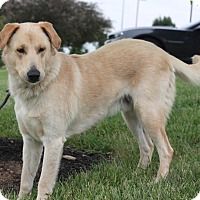 Adopt A Pet :: Midas - Lewisville, IN