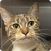 Adopt A Pet :: Lady Chatterly - Winchester, CA