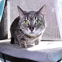 Adopt A Pet :: Mui Mui - West Palm Beach, FL