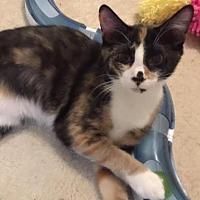 Adopt A Pet :: Josephine - Herndon, VA