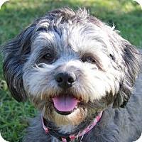 Adopt A Pet :: Oreo - La Costa, CA