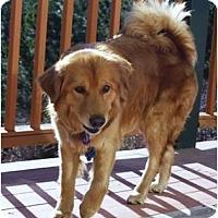 Adopt A Pet :: Maddie/Blossom - Denver, CO
