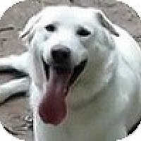 Adopt A Pet :: Max - Hamilton, ON