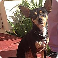 Adopt A Pet :: Celie - SPONSORED - Oakland, CA