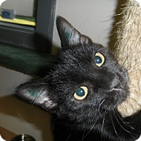 Adopt A Pet :: Whittaker - Milwaukee, WI